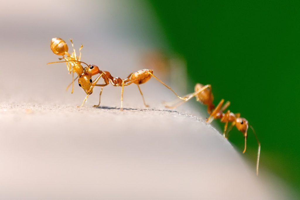 ants-2705309_1920